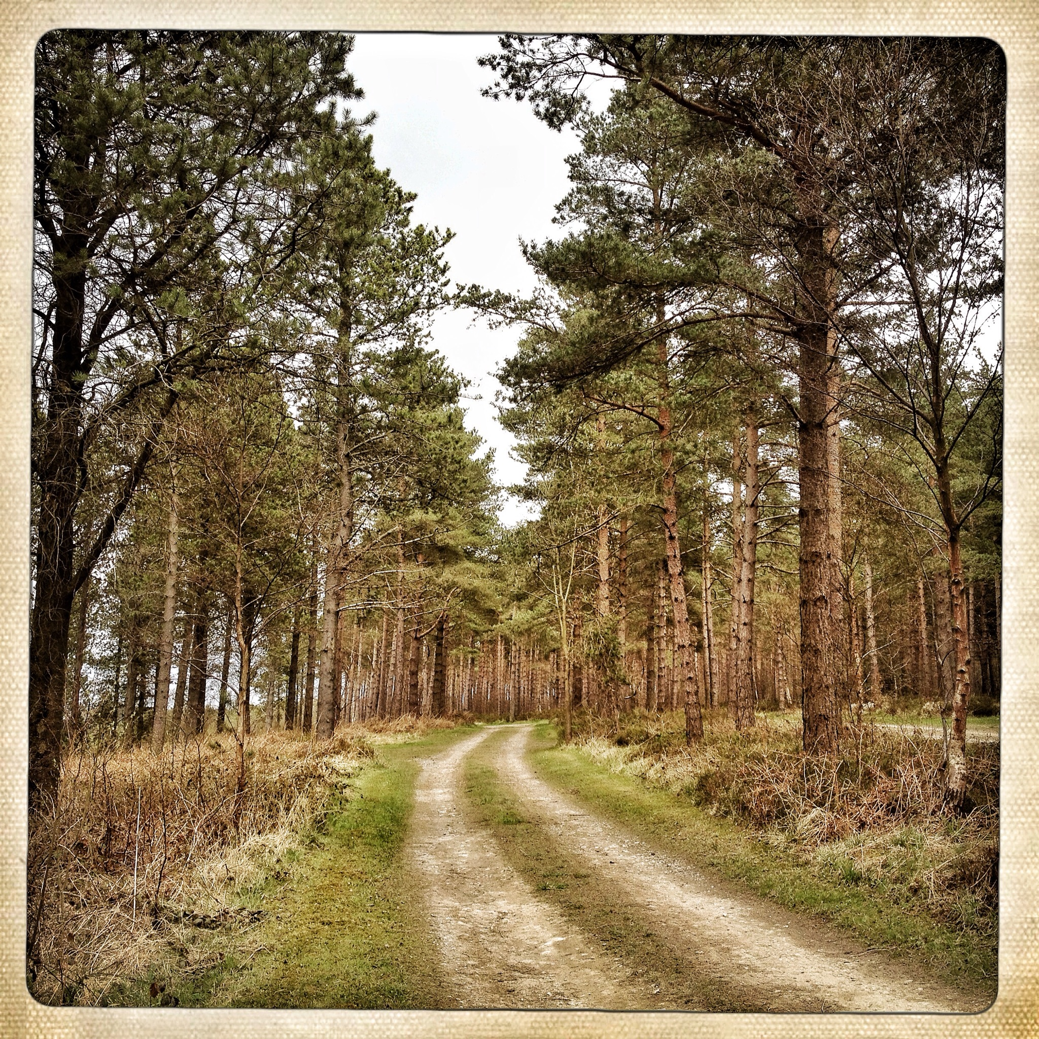 Forest firethe symbolism of trees st cuthberts final journey photography paul alexander knox biocorpaavc Choice Image
